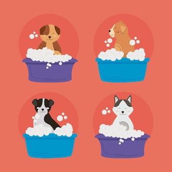 Четыре мытья домашних животных набор иконок