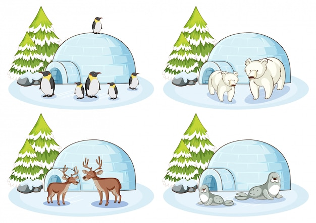 Four winter scenes with different animals