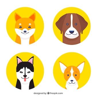 Четыре желтые круги с собаками разных пород