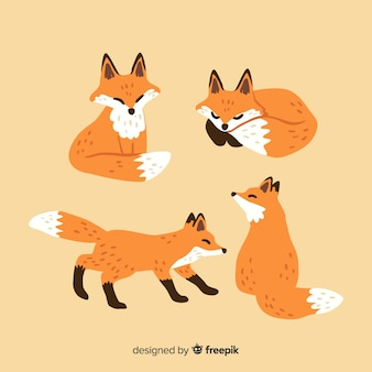 Fox collection hand drawn style