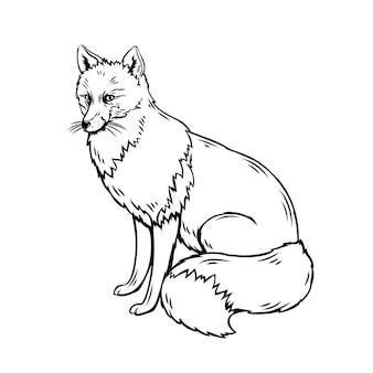 Fox outline illustration. forest animal sketch for zoo