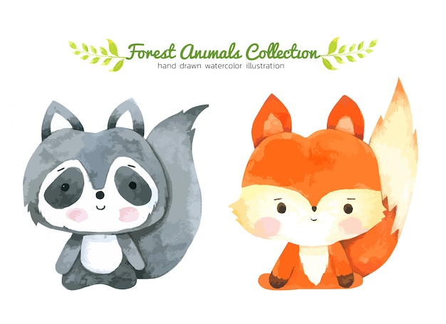 Fox and raccoon cartoon watercolor, forest animal hand drawn painted character for kids