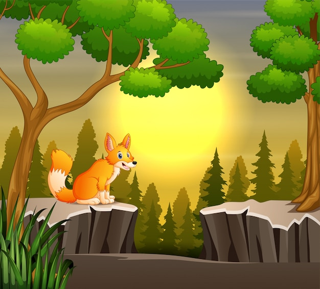A fox sitting on the cliff at sunset