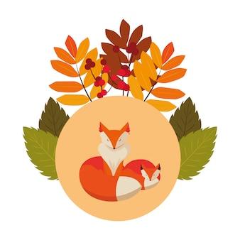 Foxes mammal happy autumn season flat