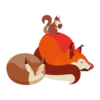 Foxes and squirrel animals on the nature