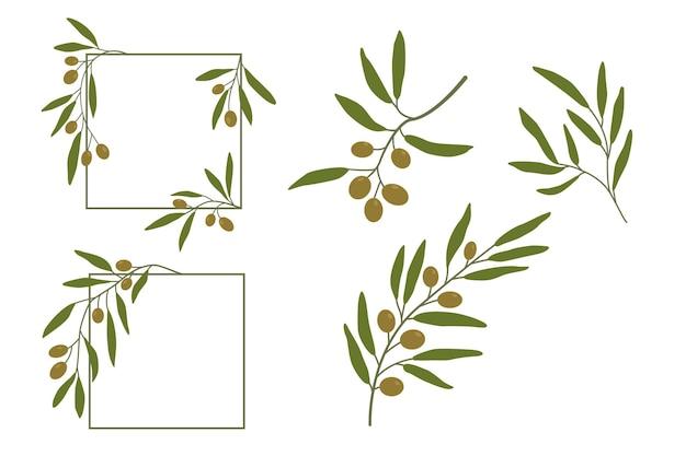 オリーブの枝とフレームの背景果物とベクトルオリーブの枝