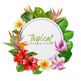 Frame illustration composed of  tropical flowers and leaves on white background hibiscus magnolia strelitzia plumeria and exotic foliage in realistic style