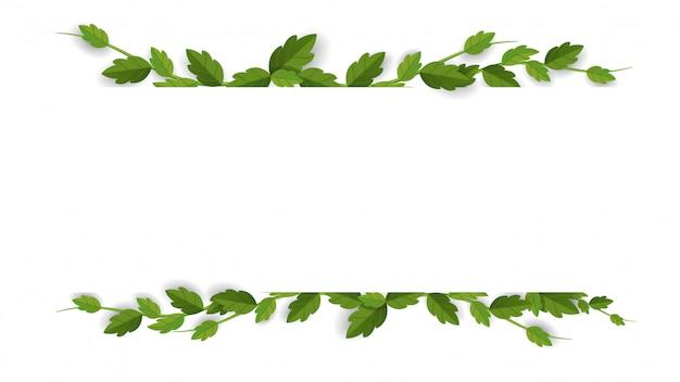 Frame of liana