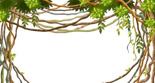 Рамка из лианы ветвей и тропических листьев.