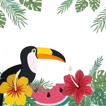 オオハシと夏の花のフレーム