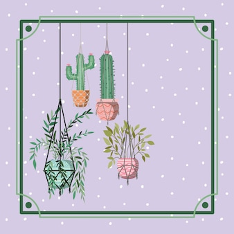 Frame with houseplants and cactus hanging in macrame