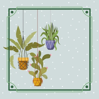 Frame with houseplants hanging in macrame