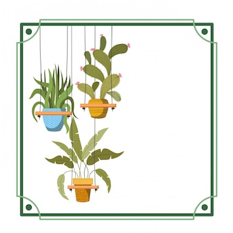 Frame with houseplants on macrame hangers