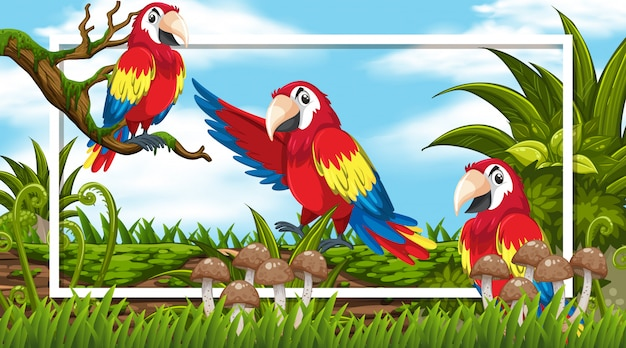 Frame  with three macaws in the woods