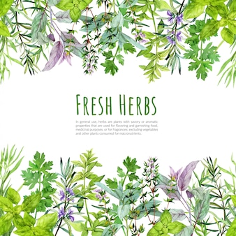 Frame with watercolor kitchen herbs and plants