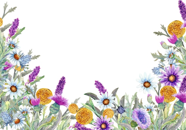 Frame with wild flowers on white background