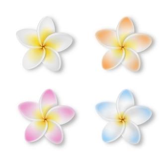 Цветок frangipani изолированный на белизне. красочные цветы плюмерия с листьями