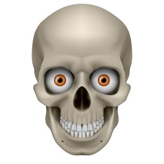 気紛れな人間の頭蓋骨