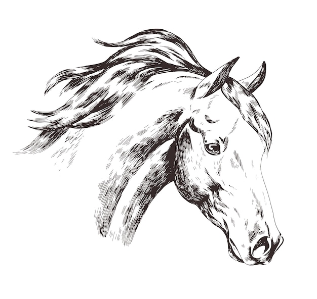 Freehand sketch of horse head