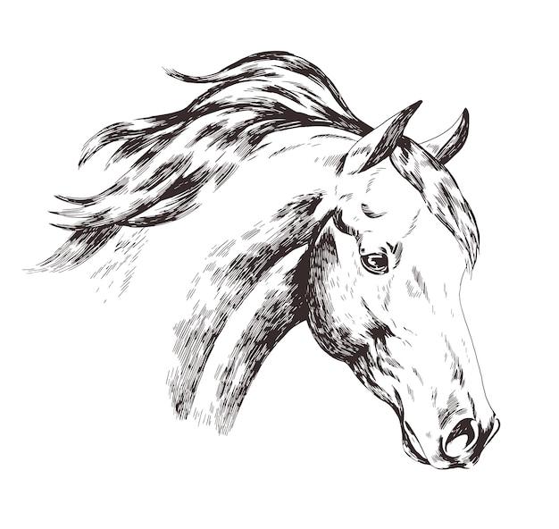 Рисунок от руки головы лошади