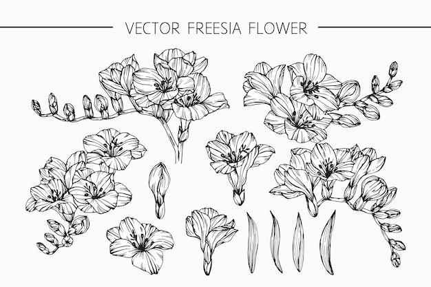 Freesia flower drawing illustration