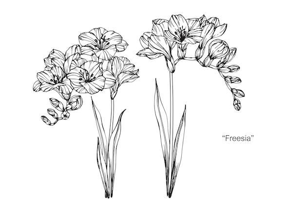 フリージアの花
