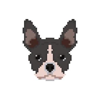 French bulldog head in pixel art style