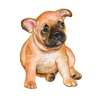 French bulldog isolated on white background. puppy is black and white. watercolor. illustration