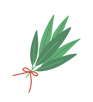 新鮮な月桂樹の葉フラットベクトルイラスト。白い背景で隔離の芳香性のハーブの花束。緑の葉は赤いリボンで結ばれています。調味料や香辛料の種類。月桂樹の葉と枝。