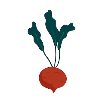 Fresh beet healthy ingredient vector