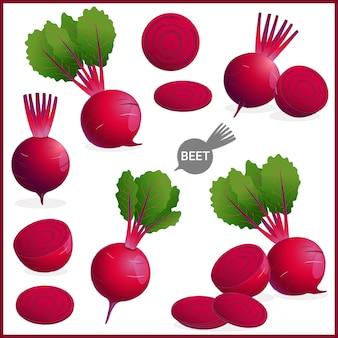 녹색 잎을 가진 신선한 사탕 무우 또는 붉은 사탕 무우 야채