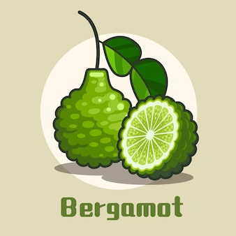 Fresh bergamot fruit with half circle slice of bergamot illustration