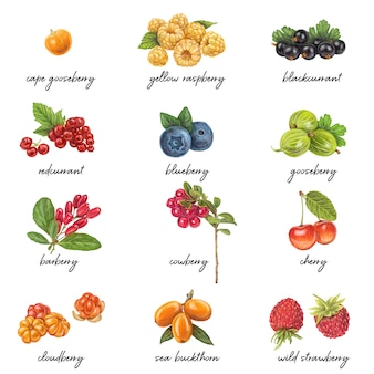 Список свежих ягод с названиями