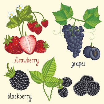 Fresh berries mix isolated, vector illustration