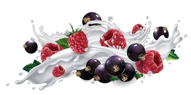 Fresh black currants and raspberries in a splash of milk or yogurt on a white background.