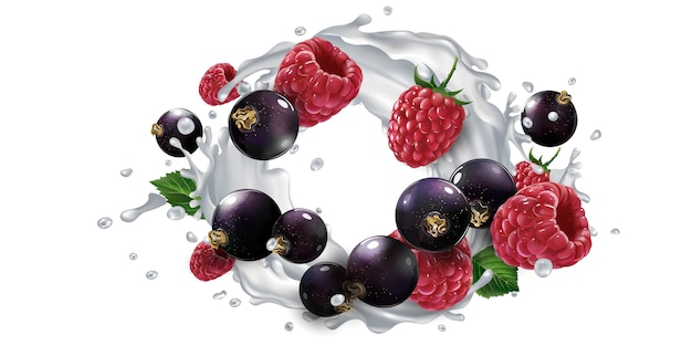 Fresh black currants and raspberries and a yogurt or milk splash on a white background. realistic illustration.