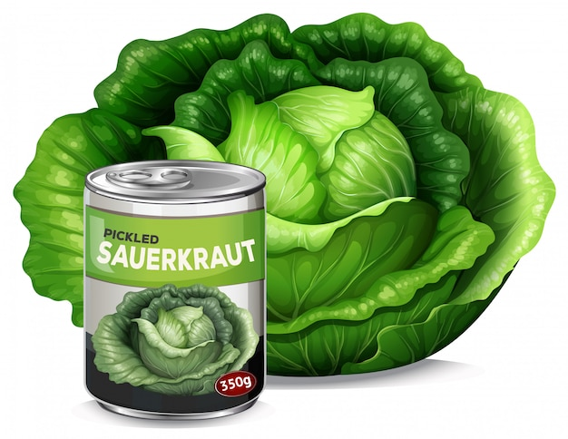 A fresh cabbage and tin of sauerkraut