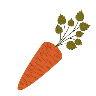 Fresh carrot isolated icon design