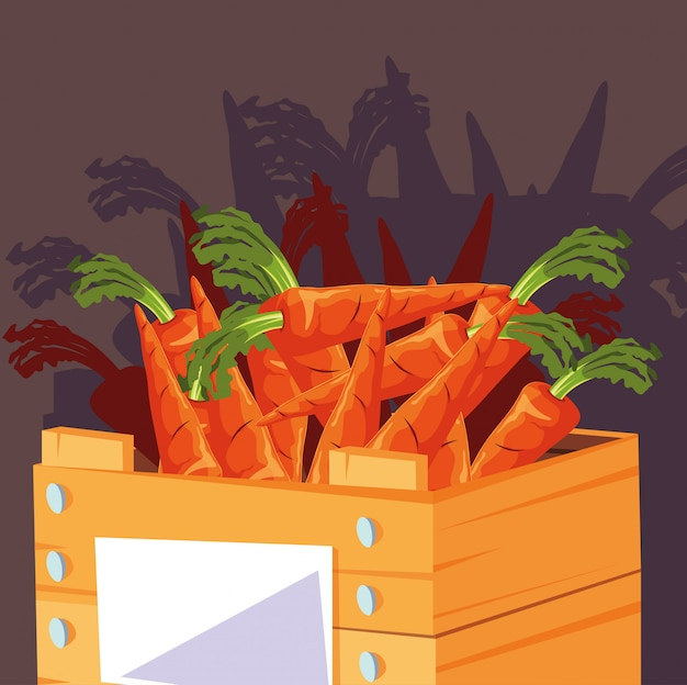 Fresh carrots vegetables in wooden crate