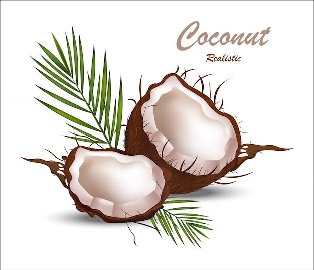 Fresh coconut tropic fruit realistic