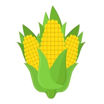 Свежая кукуруза на початке