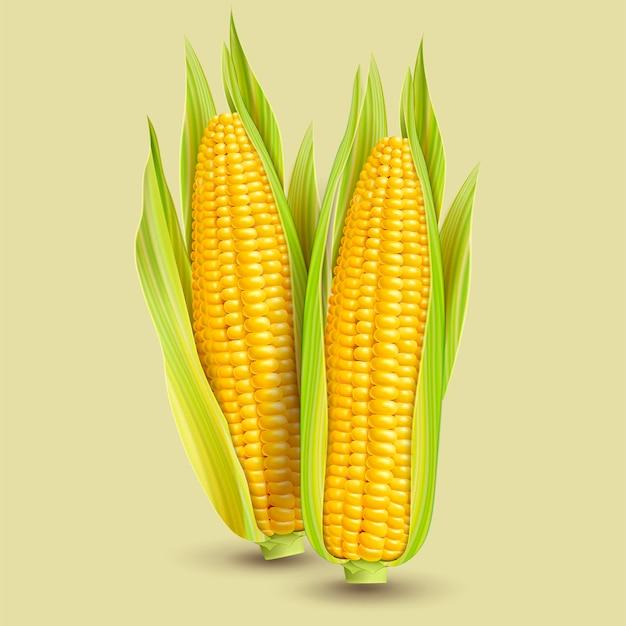 Fresh corncob design element in 3d illustration