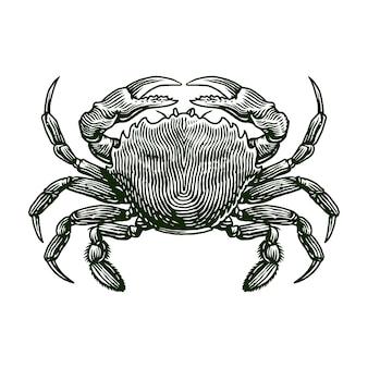 Иллюстрация гравировки свежего краба