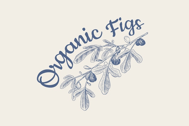 Fresh fig badge. fruit foliage label or logo. detox spice. foliage, plant and branch.