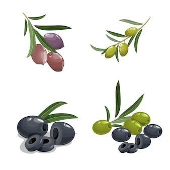 漫画風の新鮮な緑と黒のオリーブ。葉のある枝にオリーブ。黒と緑のピットオリーブ。ナチュラルエコフードとオリーブオイル。白い背景で隔離のベクトルコレクション。