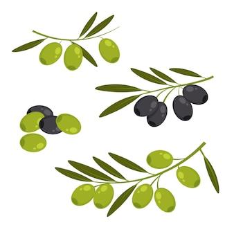 枝に葉のある新鮮な緑と黒のオリーブ。分離されたオリーブの束