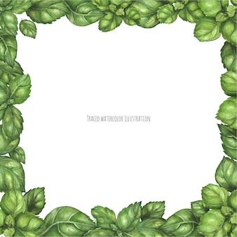 Fresh green basil square frame