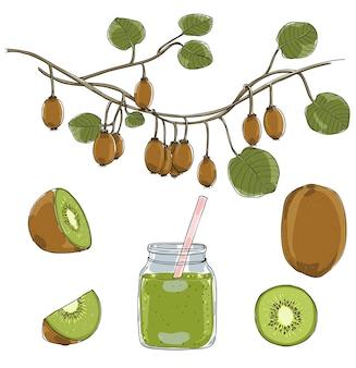 Fresh green kiwi fruit vector set illustration