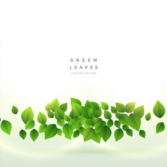 新鮮な緑の葉の背景デザイン