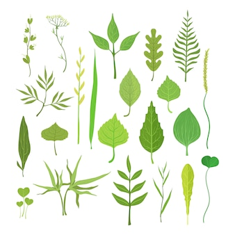 Fresh green leaves from trees, shrubs and grass set for label design.
